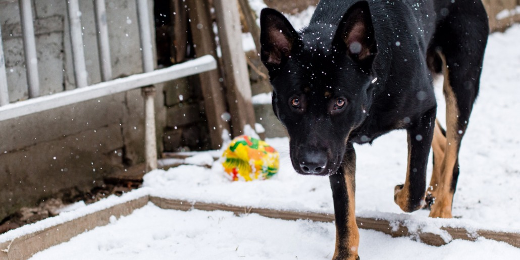 K9 Boot Camp | Raising the Standards in Dog Training