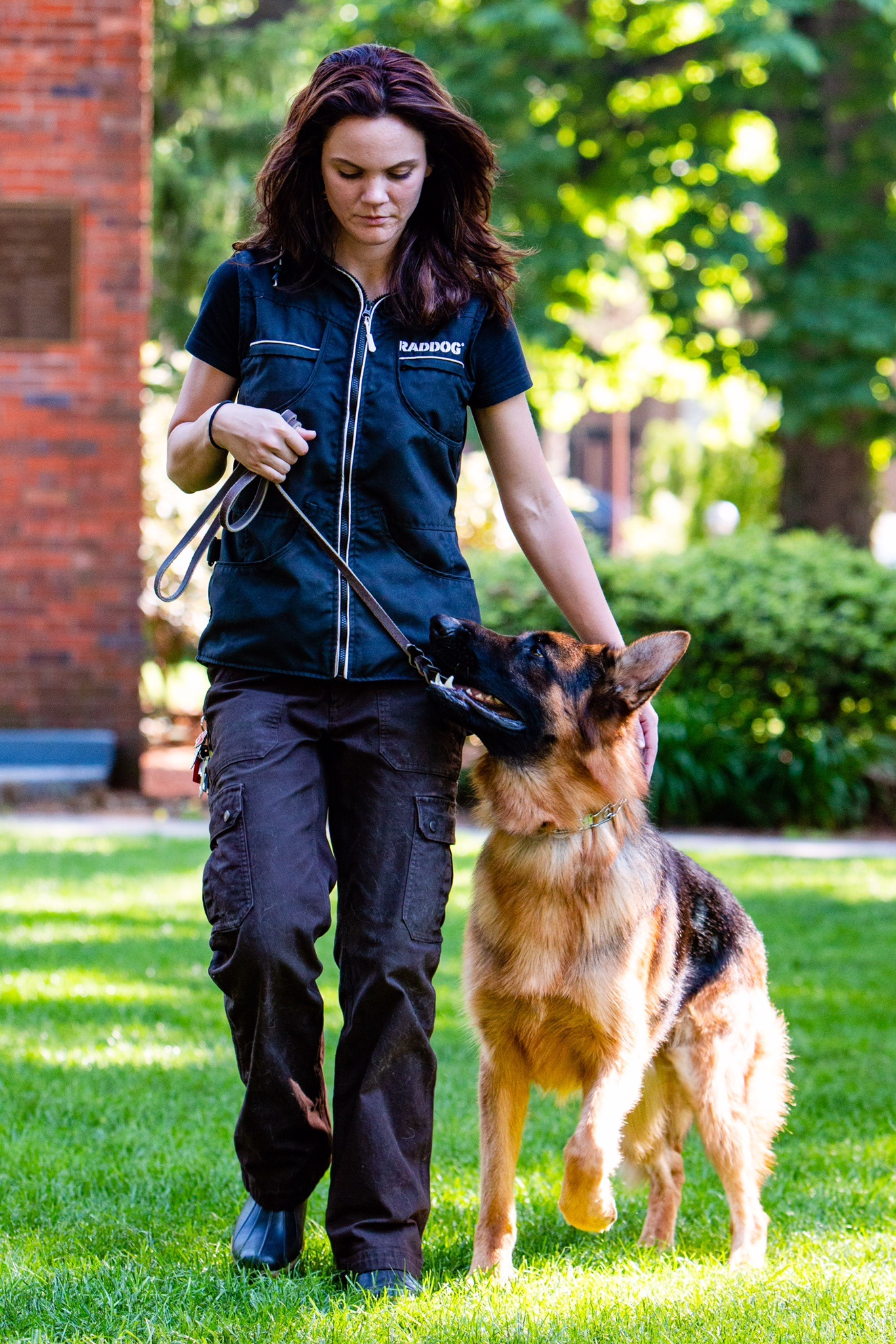 Emily teaching German Shepherd a competition Heel